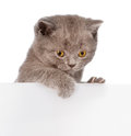 Small cat peeking from behind empty board. isolated on white Royalty Free Stock Photo