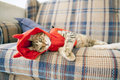 Small cat young in the bed Royalty Free Stock Photos