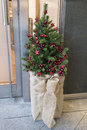 Small Christmas Tree Royalty Free Stock Photo