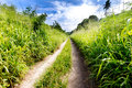 Small country road through lush foliage in vanuatu Royalty Free Stock Images