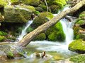 Small creek in forest flowing Stock Photos