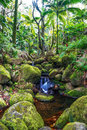 Small creek in the jungle of Big island. Hawaii. Royalty Free Stock Photo
