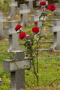 Small cross whit red rose Royalty Free Stock Image