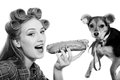 Small cute dog and beautiful young woman sharing a funny pinup blond sexy with curlers looking surprised having fun eating hot on Royalty Free Stock Photos