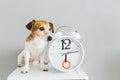 Small cute dog sitting near  white clock Royalty Free Stock Photo