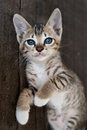 Small cute kitten Royalty Free Stock Photos