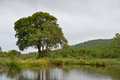 Small dam in green veld after rain surrounded by lush vegetation Royalty Free Stock Photos