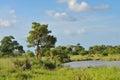 Small dam in green veld Royalty Free Stock Photo