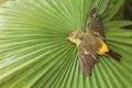 Small Dead Sparrow