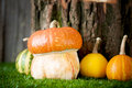 Small decorative pumpkins on green grass Royalty Free Stock Photography