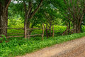 Small dirt road in rural village Royalty Free Stock Photo