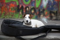 Small Dog Musician Compagnim Sitting In Guitar Case Street