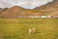 Small dog past the mountain village of Central Asia Royalty Free Stock Photo