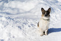 A small dog sitting on snowy road Royalty Free Stock Photo