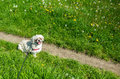 Small dog waiting his owner for the walk Stock Image