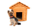 Small dog with wooden dog s house and Stock Photo