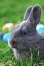 Small easter rabbit Stock Photos
