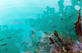 Small fish shoal in azure lake Stock Photography