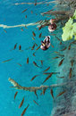 Small fish shoal and wild ducks in azure lake Stock Photo