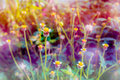Small flower grass and multi color of light Stock Photo