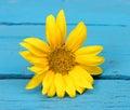 Small Flower Yellow Sunflower