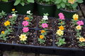 Small flowers growing in plant tray