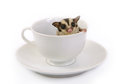 Small flying squirrel in white ceramic cup of coffee on background Royalty Free Stock Photography