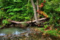 Small forest river Stock Photography