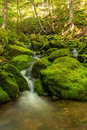 Small forest stream near Third Vault Falls Royalty Free Stock Photo