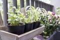 Small garden on the balcony Royalty Free Stock Photo