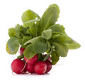Small garden radish with leaves isolated on white background cutout Stock Images