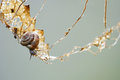 Small gastropod on a climbing tour in a dry leaf metaphor backg snail adventure scene creeps carefully risky but it eats the which Royalty Free Stock Photography