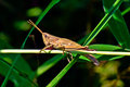 Small grasshoppers on green blade of grass Stock Images