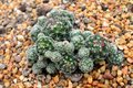 Small Green Cactus