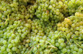 Small green grapes bunches Royalty Free Stock Photo