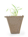Small green growing plant into peat pot side view. Dill seedling Royalty Free Stock Photo