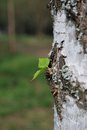 Small green leaf on the tree Stock Image