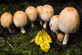 Small group of mushrooms in autumn Royalty Free Stock Photo