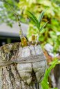 Small growing orchid flower in the coconut pot