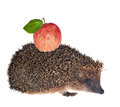 Small hedgehog with red apple isolated on white background Stock Photography