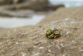 Small hermit crab in seasnail shell on a rock Stock Photo