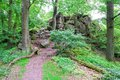 Small hiking trail in green forest with rock Royalty Free Stock Photos