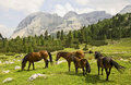 Small Horses in a Grand Landscape Royalty Free Stock Photography