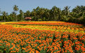 Small house with flower fields in Ben Tre, Vietnam Royalty Free Stock Photo