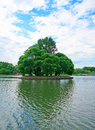 Small island with tall trees with a heart shaped shadow in the c center of pond Stock Images