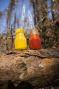 Small jars of ketchup and mustard opened on a log Royalty Free Stock Images