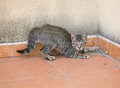 Small kitten on alert Royalty Free Stock Photo