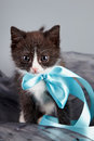 Small kitten with a blue bow Royalty Free Stock Photography