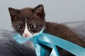 Small kitten with a blue bow Royalty Free Stock Photos