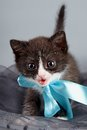 Small kitten with a blue bow Royalty Free Stock Images
